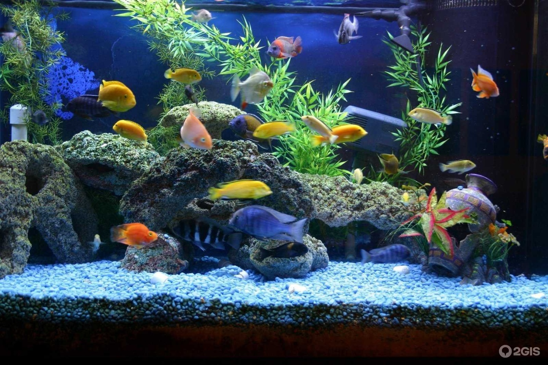 Как почистить аквариум в домашних условиях