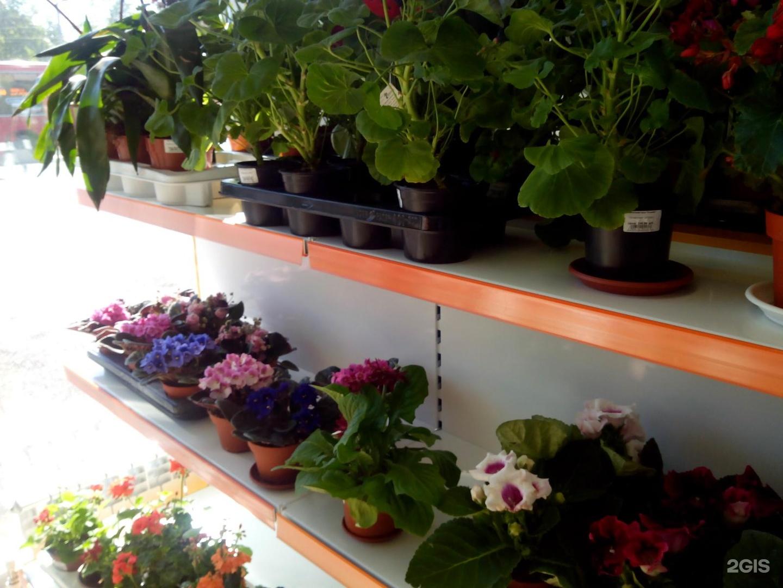 Цветочный магазин клумба в казани