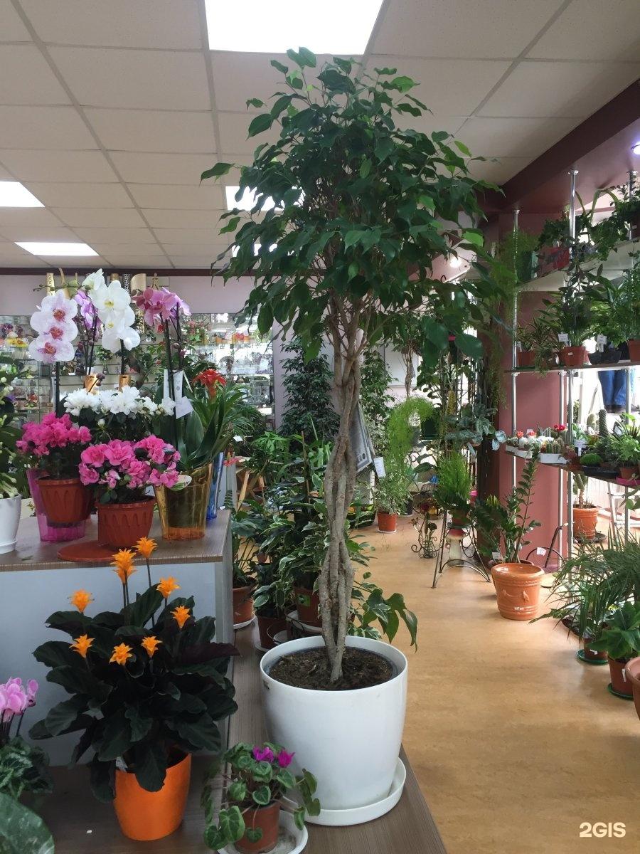 Цветов с доставкой краснодар через интернет магазин комнатных