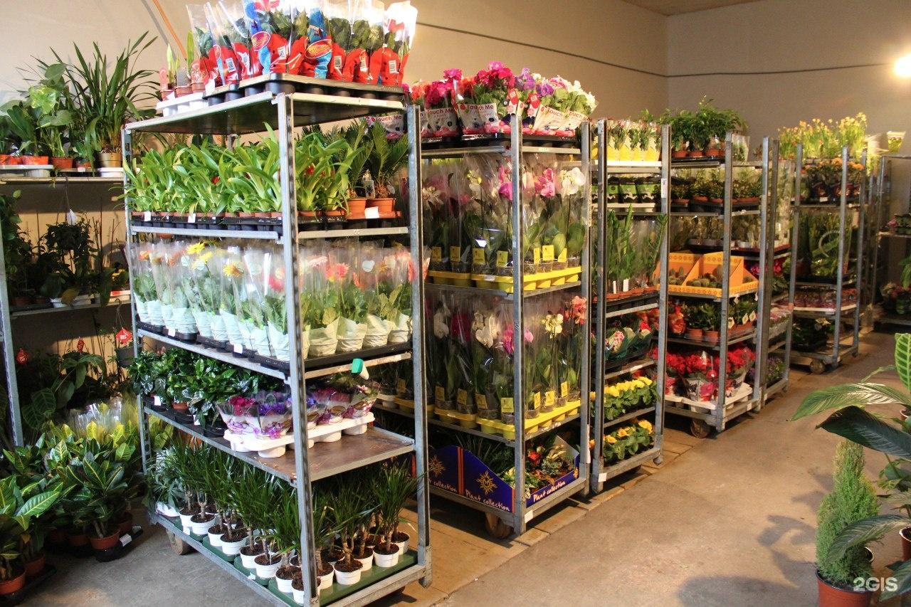 Адрес оптовый склад цветов волгограде