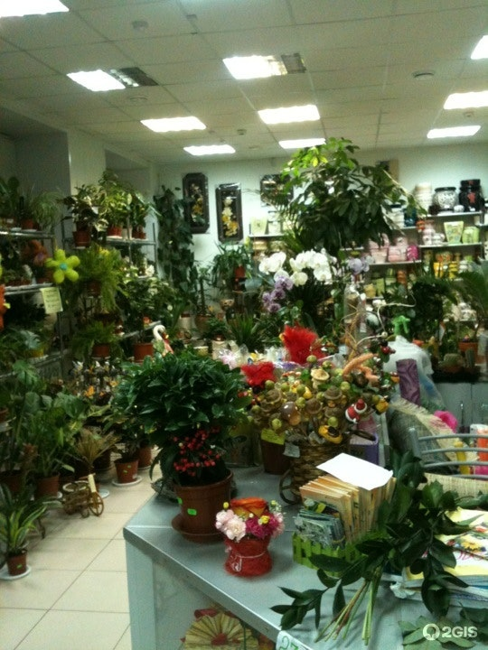 Азалия магазин цветов оптом киев
