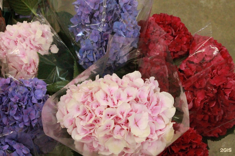 Галантус калуга купить цветы, подарок новый год