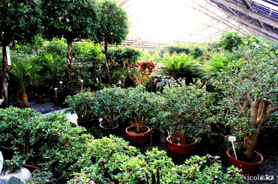 Магазин комнатных растений в алматы, цветов